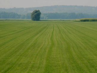 Open Land For Sale in Hyderabad